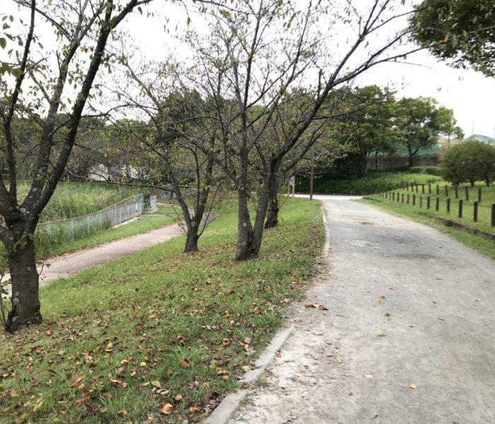 名古屋市天白区 公園 細口池公園